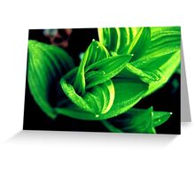 35mm Green Plant Greeting Card