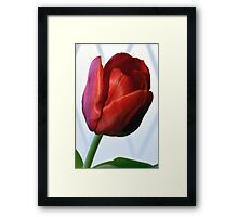 Red Tulip Portrait. Framed Print