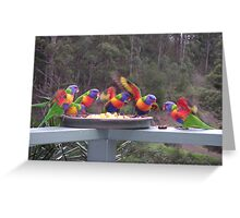 Rainbow Lorikeets Feeding Frenzy Greeting Card