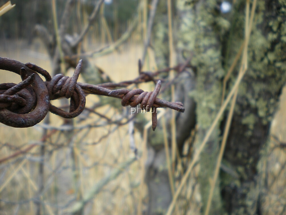 barb wire  by phifur