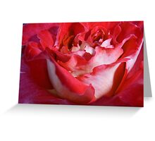 Rose with Water Droplet Greeting Card