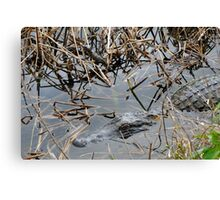 Mother and baby Alligator Canvas Print