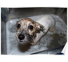 Drowned Rat- Millie Takes A Bath 01 Poster