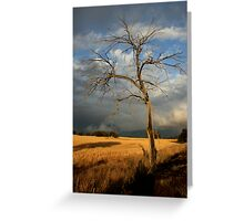 dead tree /clearing storm Greeting Card