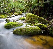 Toorongo River Cascades. by Mark Jones