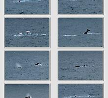 A Whale of a Tale by Sherrianne Talon