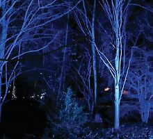 Anglesey Abbey, Winter Lights 2014 #7 by NA-Designs