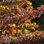 nature's colors and light - colores y luz de la naturaleza by Bernhard Matejka