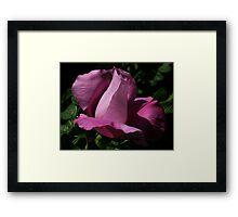 dark beach rose Framed Print