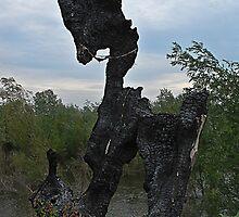 Trojan horse by Aleksandra Misic