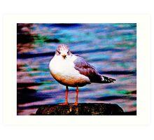 Boston Seagull Art Print
