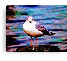 Boston Seagull Canvas Print