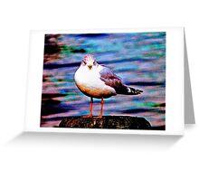 Boston Seagull Greeting Card