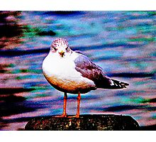 Boston Seagull Photographic Print
