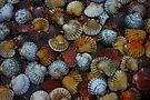 Shells by Anne Staub