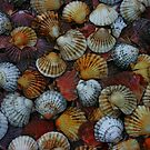 Shells by Anne Staub