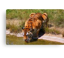 The Water Hole......... Canvas Print