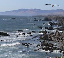 Bodega Bay, CA #2 by Debra  Lungren