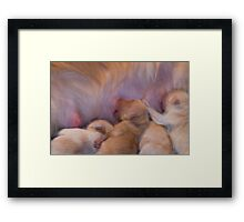 Survival Of The Fittest(Daisy's Puppies) Framed Print