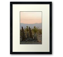 Yucca schidigera Framed Print