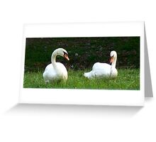 The language of Swans Greeting Card