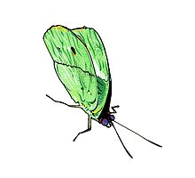 Green Butterfly by theroywood
