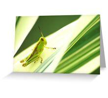 Pinstripe Hopper Greeting Card