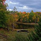 Autumn Pond by Mike Griffiths