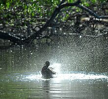The Early Bird Gets a Bath by Peter Kurdulija
