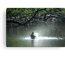 The Early Bird Gets a Bath Canvas Print