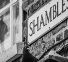 Shady Pigeon of the Shambles Sticker