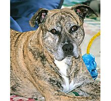 Kelly.. a canine.....portrait.. Photographic Print