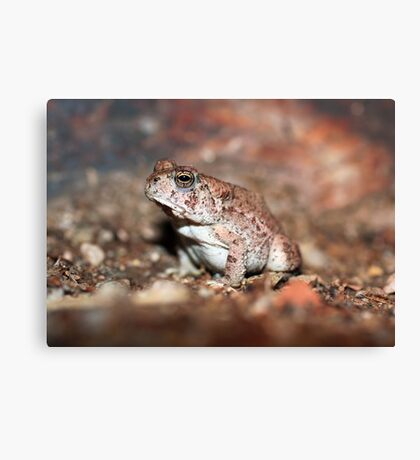 Red-spotted Toad Canvas Print