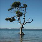 Meditation Tree by Helen Phillips