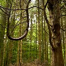 Tree Curves by Maureen  Geraghty