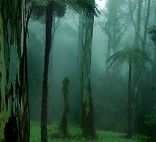 Tree Fern Mist by Sue Wickham