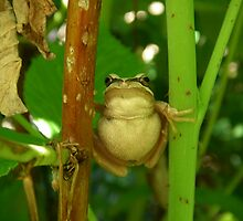 brown tree frog by Donovan wilson