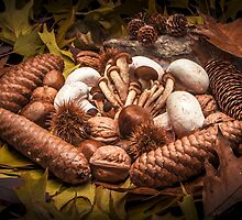 Autumnal still life composition with mushrooms by enolabrain