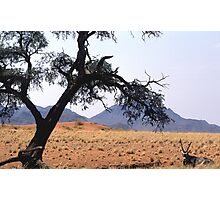Oryx hiding fro the midday sun Photographic Print