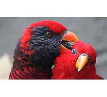 Red Lory....... Photographic Print