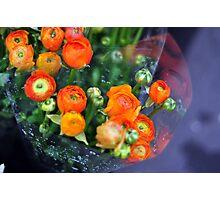 A Dewey Flower Morning  Photographic Print