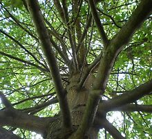 tree from botanical gardens by phifur
