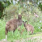 Floe & her Joey see me watching them. 'Arilka' Mt. Pleasant. Sth. Australia. by Rita Blom