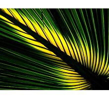 Lighted Palm Photographic Print