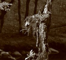 wood spirit comes into view by Christopher  Ewing