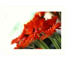 orange gerberas Art Print