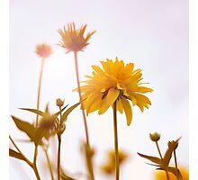 yellow pom-pom Photographic Print