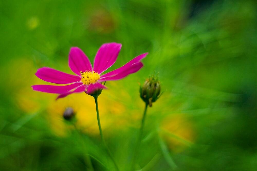 Enchanted Garden by sandra arduini