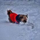 Frolicking in the snow by vigor
