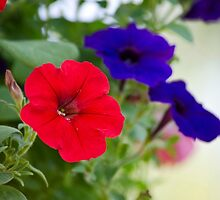 Vintage Petunia Flowers by Christina Rollo